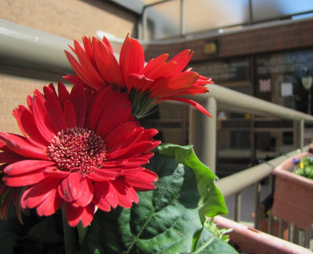 14 Sadimo cvijece 2013